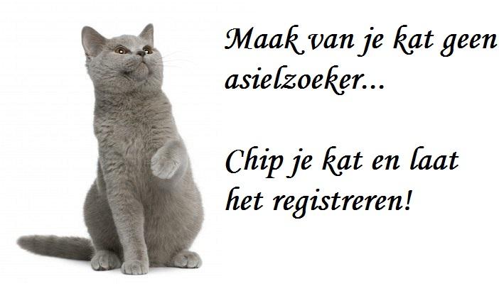 ChippenKat